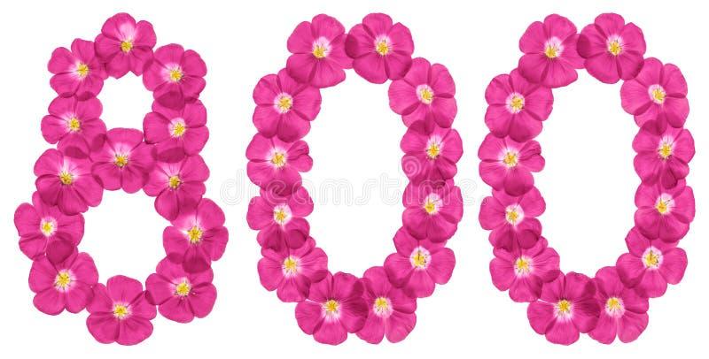 Numeral árabe 800, oito cem, das flores cor-de-rosa do linho, isoladas no fundo branco imagem de stock