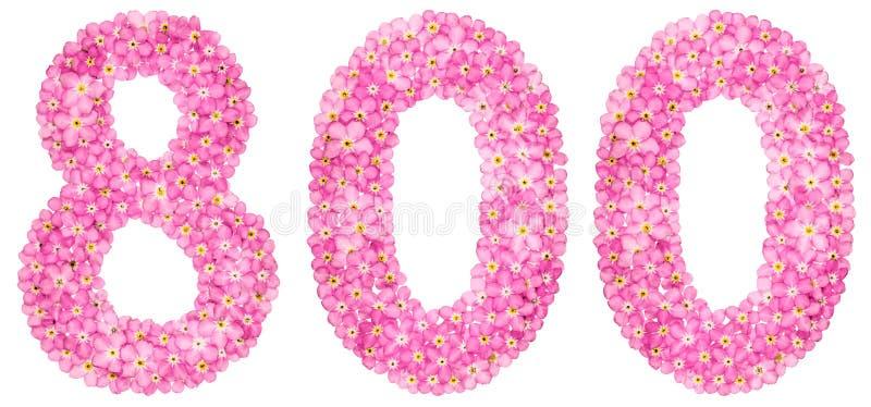 Numeral árabe 800, oito cem, do flowe cor-de-rosa do miosótis fotografia de stock