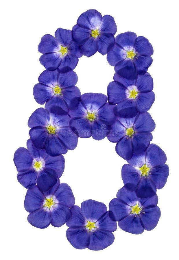 Numeral árabe 8, oito, das flores azuis do linho, isoladas sobre imagens de stock royalty free