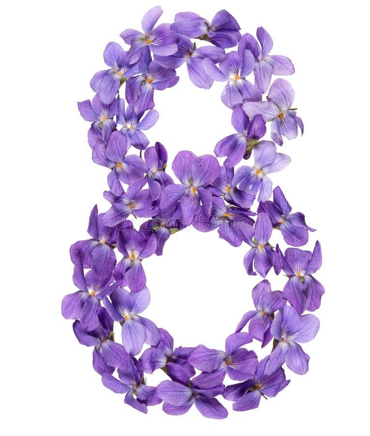 Numeral árabe 8, oito, das flores da viola, isoladas no whit foto de stock