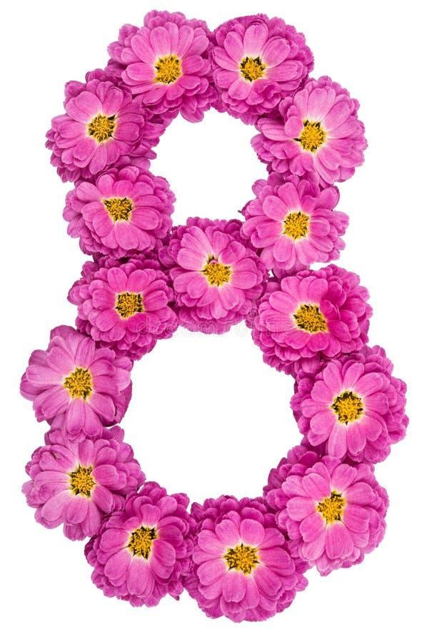 Numeral árabe 8, oito, das flores do crisântemo, isoladas fotografia de stock