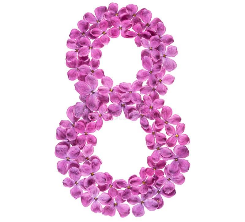 Numeral árabe 8, oito, das flores do lilás, isoladas no whit imagem de stock