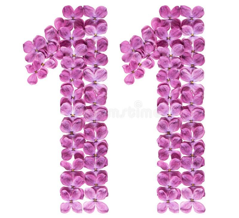 Numeral árabe 11, onze, das flores do lilás, isoladas no wh imagem de stock royalty free