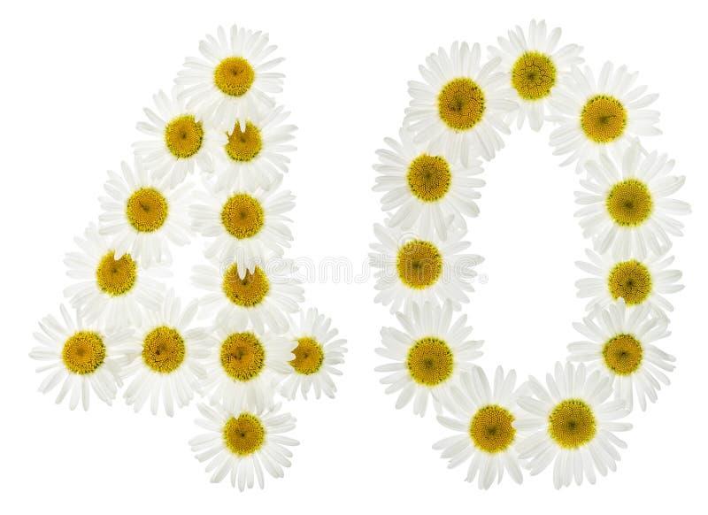 Numeral árabe 40, quarenta, das flores brancas da camomila, isola imagem de stock royalty free