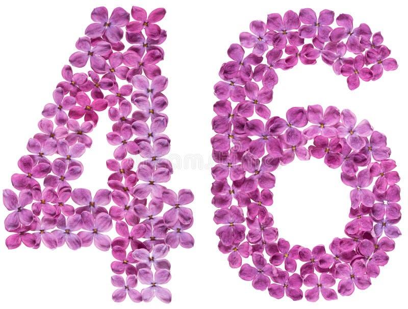 Numeral árabe 46, quarenta e seis, das flores do lilás, isoladas sobre fotografia de stock