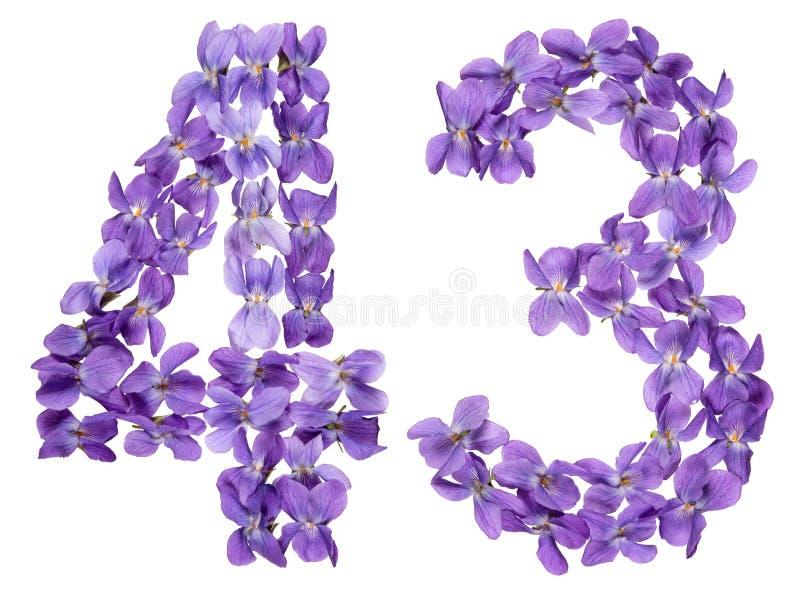 Numeral árabe 43, quarenta e três, das flores da viola, isoladas fotografia de stock