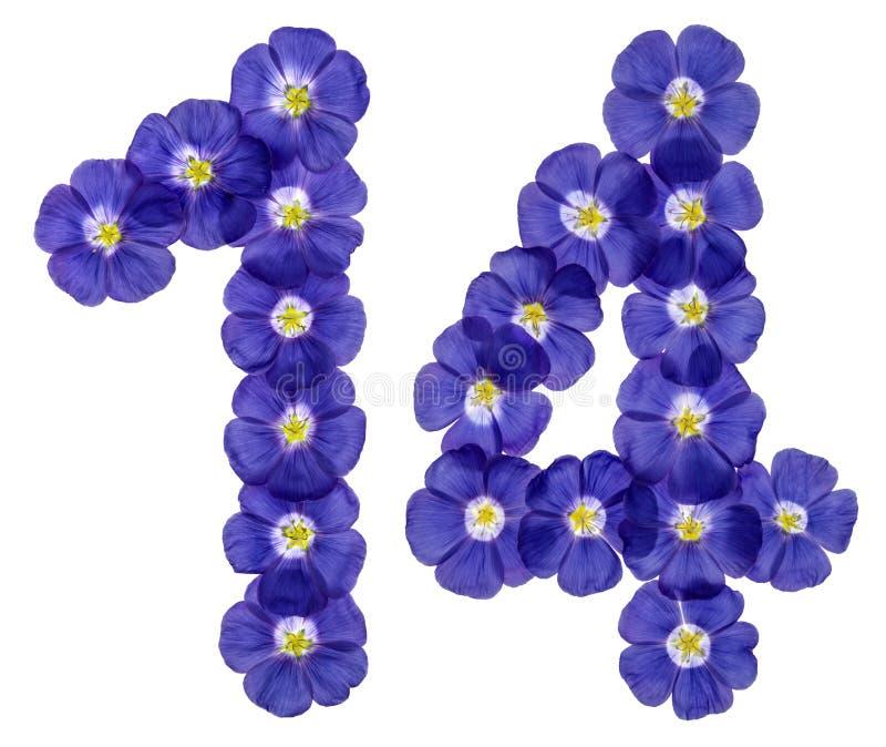 Numeral árabe 14, quatorze, das flores azuis do linho, isoladas imagem de stock royalty free