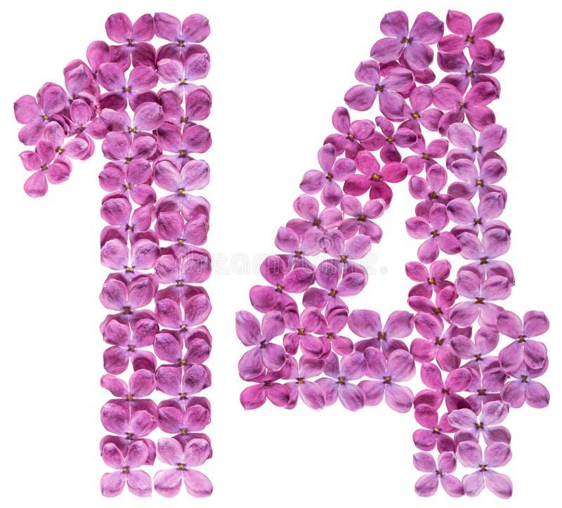 Numeral árabe 14, quatorze, das flores do lilás, isoladas sobre foto de stock