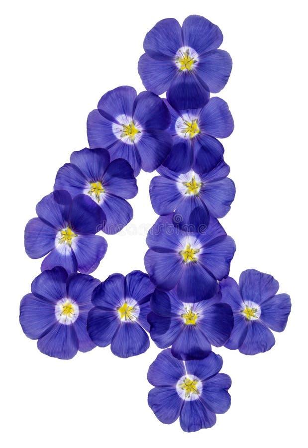 Numeral árabe 4, quatro, das flores azuis do linho, isoladas em w fotografia de stock royalty free