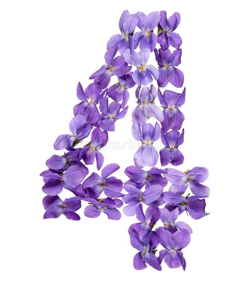 Numeral árabe 4, quatro, das flores da viola, isoladas no branco imagens de stock