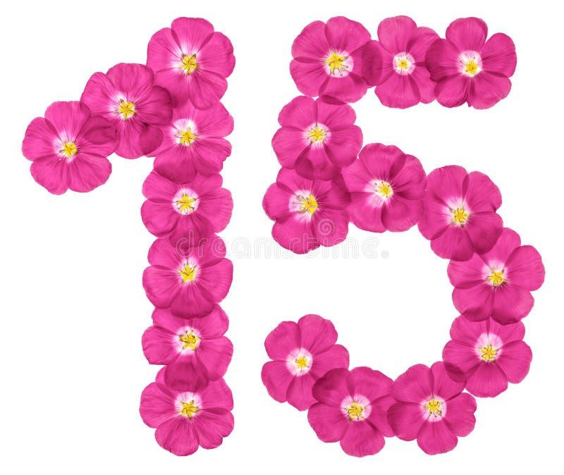 Numeral árabe 15, quinze, das flores cor-de-rosa do linho, isoladas no fundo branco fotos de stock