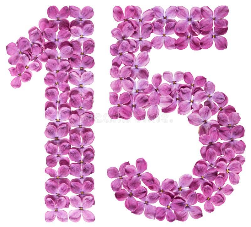 Numeral árabe 15, quinze, das flores do lilás, isoladas em w foto de stock royalty free
