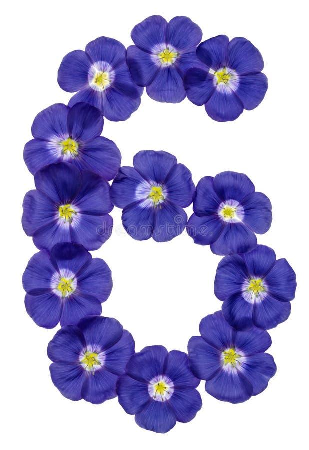 Numeral árabe 6, seis, das flores azuis do linho, isoladas no wh imagens de stock royalty free