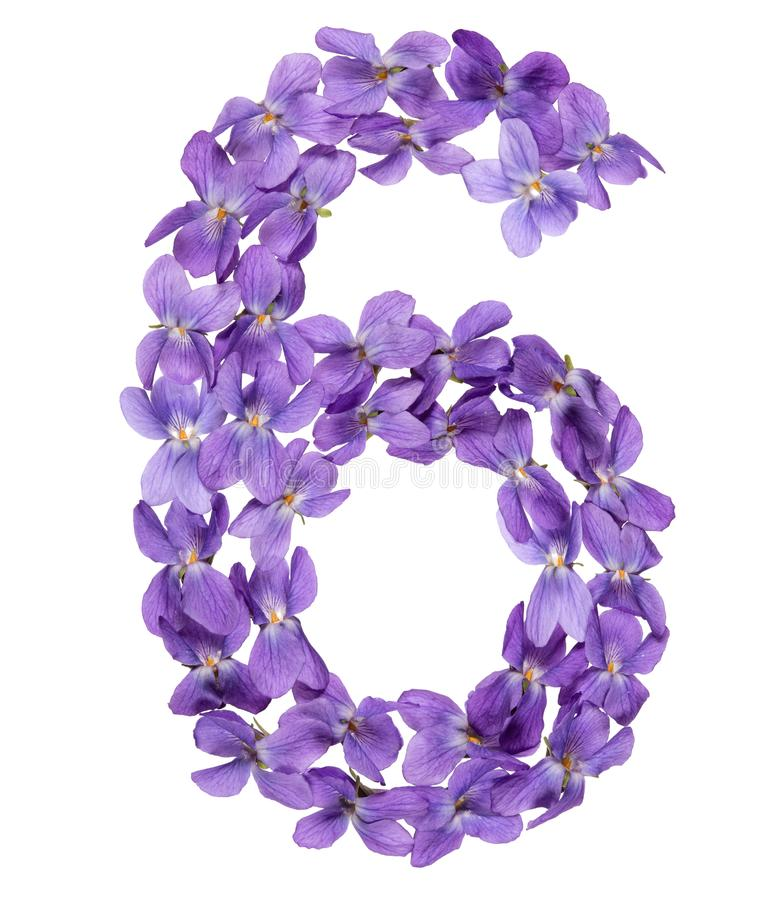 Numeral árabe 6, seis, das flores da viola, isoladas no branco imagens de stock royalty free