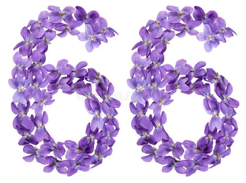 Numeral árabe 66, sessenta e seis, das flores da viola, isoladas sobre foto de stock