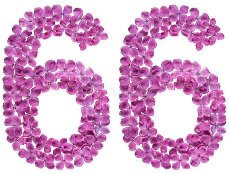 Numeral árabe 66, sessenta e seis, das flores do lilás, isoladas sobre imagens de stock royalty free