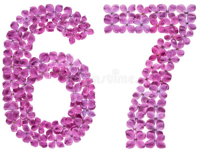 Numeral árabe 67, sessenta e sete, das flores do lilás, isoladas fotografia de stock