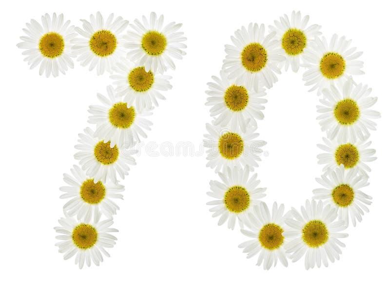 Numeral árabe 70, setenta, das flores brancas da camomila, iso fotos de stock royalty free