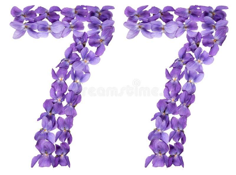 Numeral árabe 77, setenta sete, das flores da viola, isolado fotografia de stock