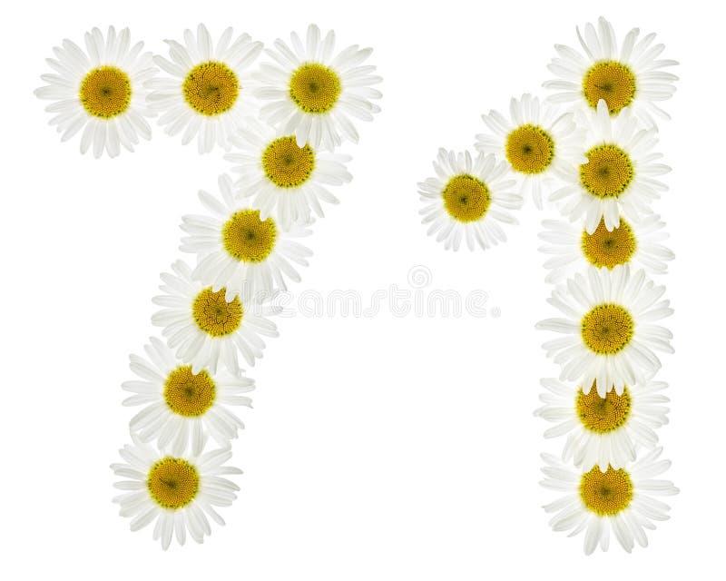Numeral árabe 71, setenta uns, das flores brancas da camomila, imagens de stock royalty free