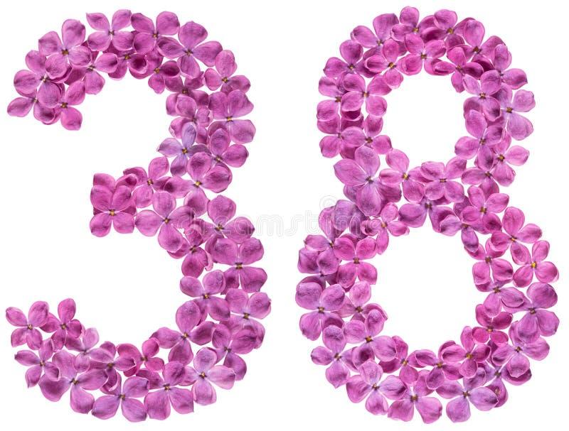 Numeral árabe 38, trinta e oito, das flores do lilás, isoladas imagens de stock royalty free