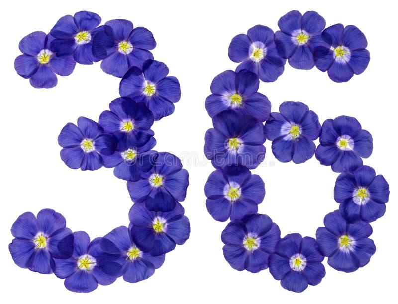 Numeral árabe 36, trinta e seis, das flores azuis do linho, isolat fotografia de stock