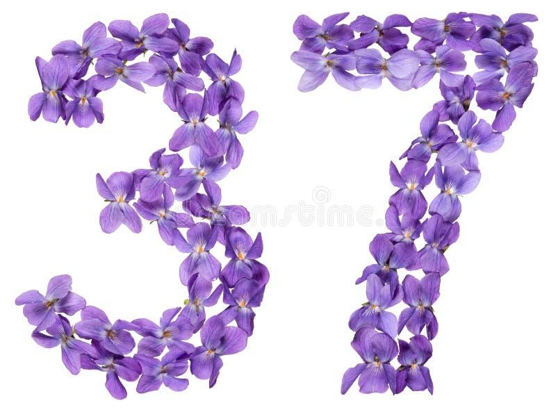 Numeral árabe 37, trinta e sete, das flores da viola, isoladas imagens de stock