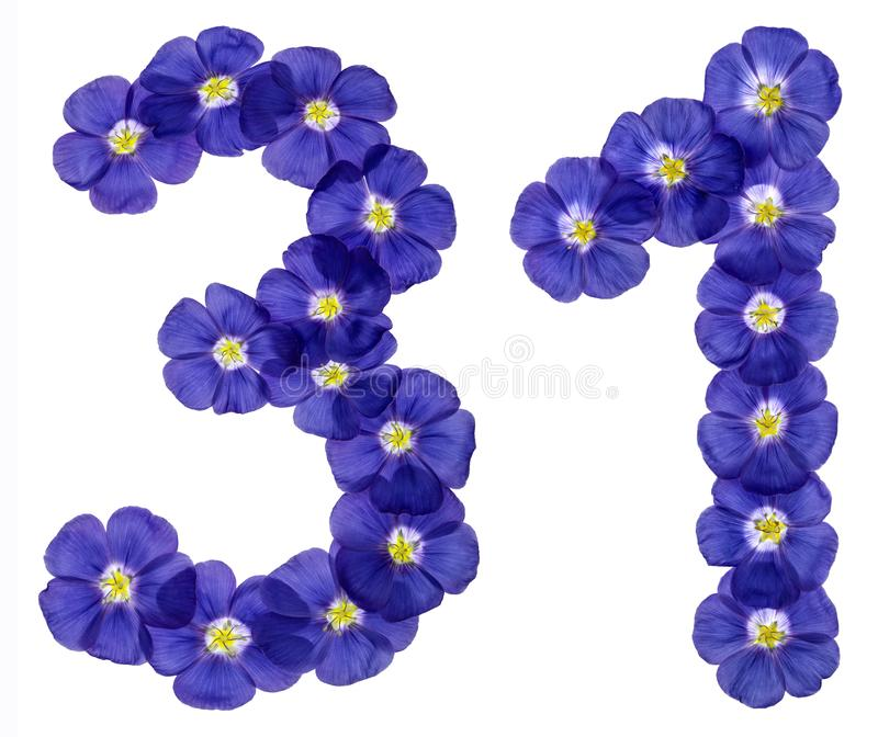 Numeral árabe 31, trinta uns, das flores azuis do linho, isolat fotos de stock
