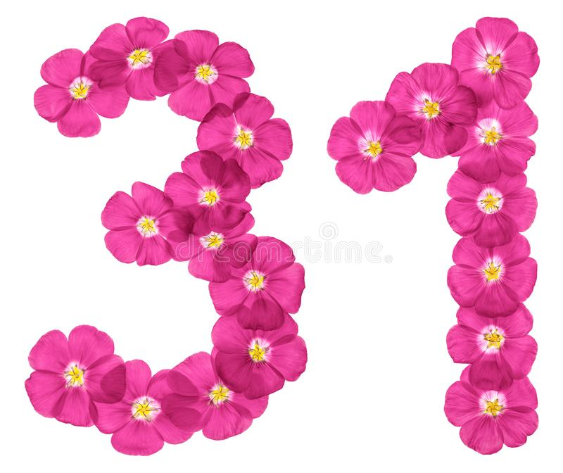Numeral árabe 31, trinta uns, das flores cor-de-rosa do linho, isoladas no fundo branco fotos de stock royalty free