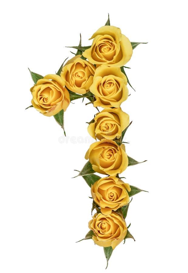Numeral árabe 1, um, das flores amarelas da rosa, isoladas sobre foto de stock