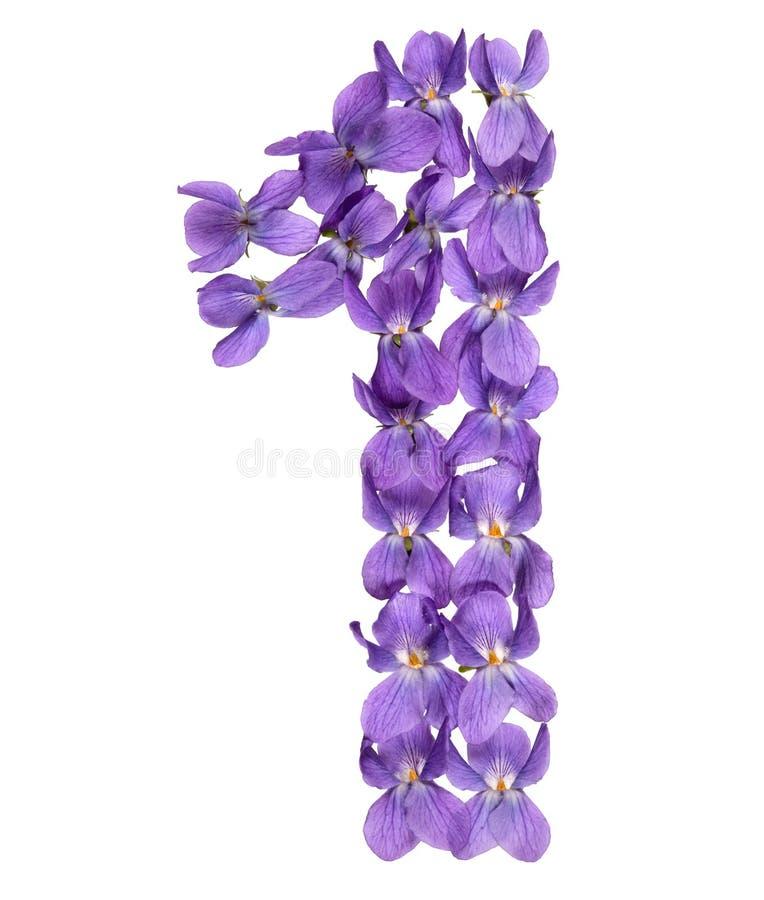 Numeral árabe 1, um, das flores da viola, isoladas no branco fotos de stock royalty free