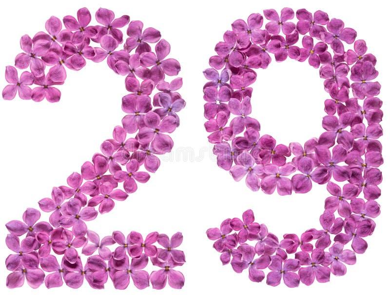 Numeral árabe 29, vinte e nove, das flores do lilás, isoladas imagens de stock royalty free