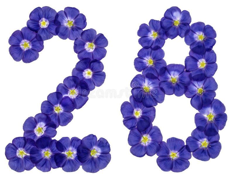 Numeral árabe 28, vinte e oito, das flores azuis do linho, isolador imagem de stock