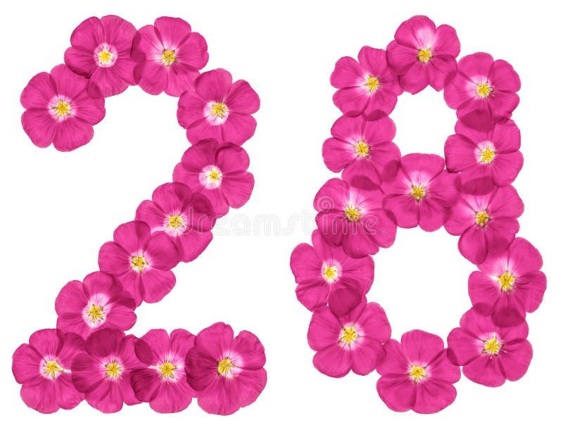 Numeral árabe 28, vinte e oito, das flores cor-de-rosa do linho, isoladas no fundo branco imagens de stock