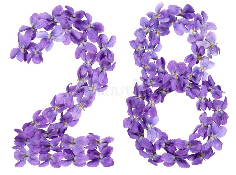 Numeral árabe 28, vinte e oito, das flores da viola, isoladas imagens de stock