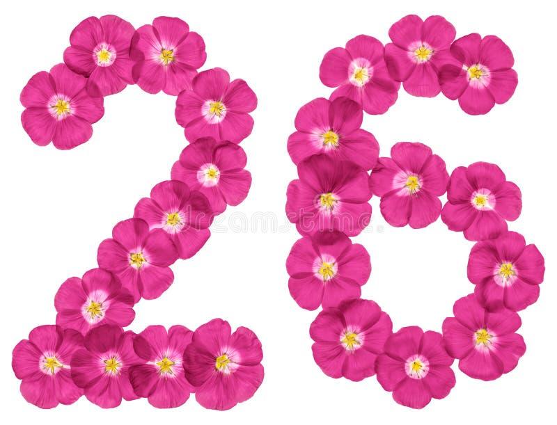 Numeral árabe 26, vinte e seis, das flores cor-de-rosa do linho, isoladas no fundo branco foto de stock royalty free