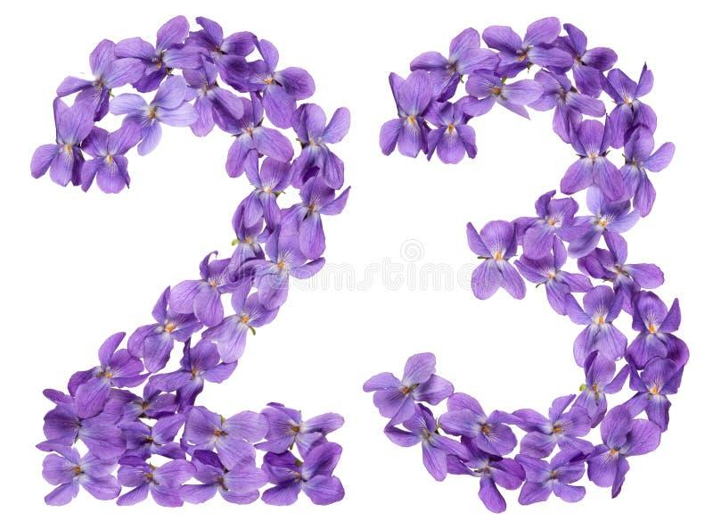 Numeral árabe 23, vinte e três, das flores da viola, isoladas fotos de stock royalty free