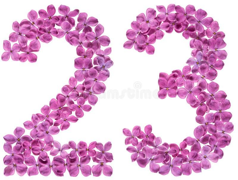 Numeral árabe 23, vinte e três, das flores do lilás, isoladas imagens de stock