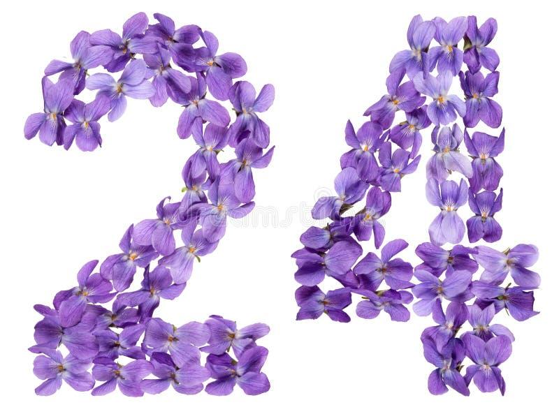 Numeral árabe 24, vinte quatro, das flores da viola, isoladas foto de stock