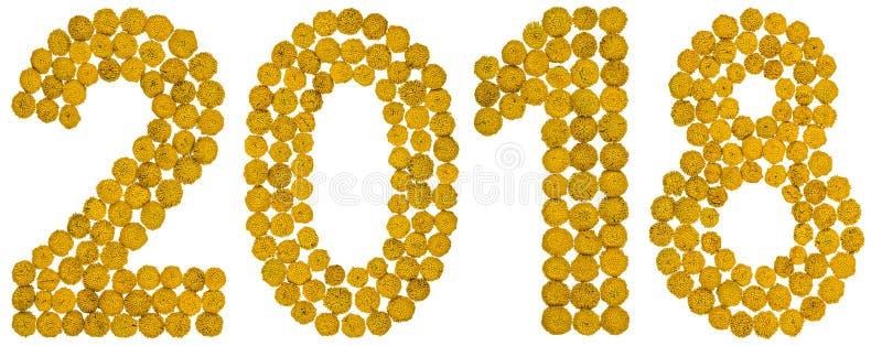 Numeral 2018 da flor amarela do tansy, isolada na parte traseira do branco foto de stock royalty free