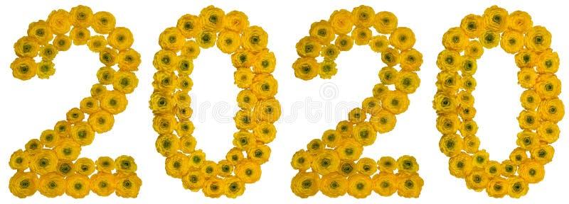 Numeral 2020 das flores amarelas do botão de ouro, isoladas no branco fotografia de stock royalty free