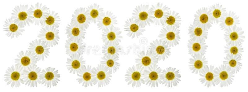 Numeral 2020 das flores brancas da camomila, isoladas no branco foto de stock