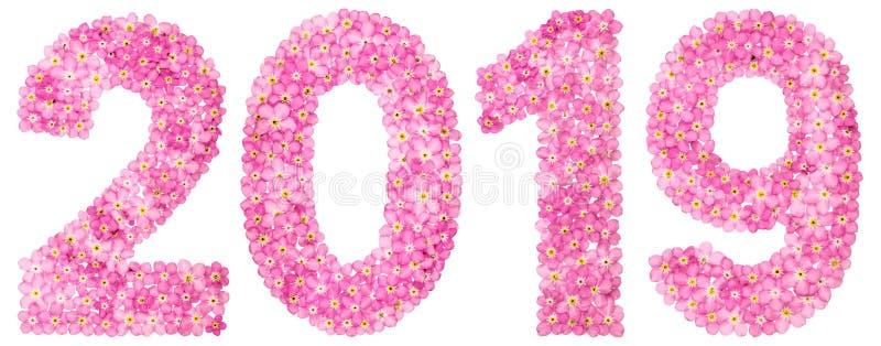Numeral 2019 das flores cor-de-rosa do miosótis, isoladas no branco fotos de stock