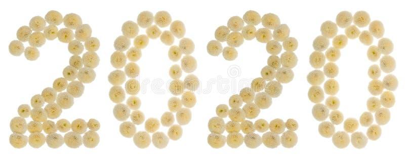 Numeral 2020 das flores de creme do crisântemo, isoladas no wh imagem de stock royalty free