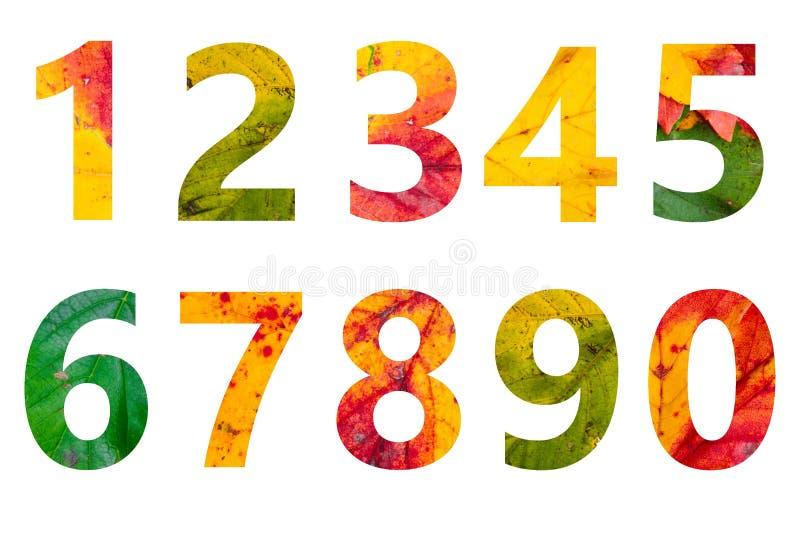 Numeri delle foglie di autunno isolate su fondo bianco fotografie stock