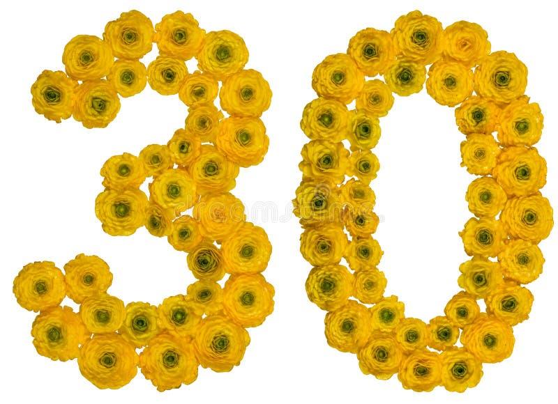 Numero arabo 30, trenta, dai fiori gialli del ranuncolo, iso fotografie stock libere da diritti