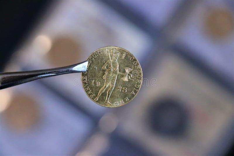 Numismatic на работе показывает некоторые золотые монеты стоковая фотография