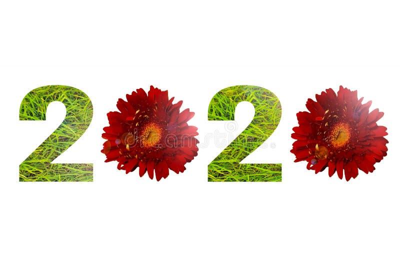 Nummer 2020 maakte groen gras en rode die madeliefjebloemen op witte achtergrond wordt geïsoleerd royalty-vrije stock afbeelding