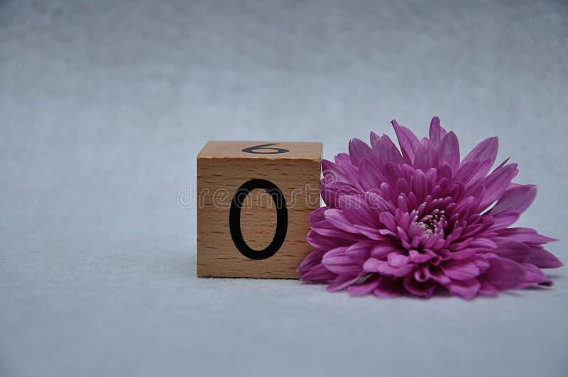 Nummer noll med en rosa aster royaltyfri fotografi