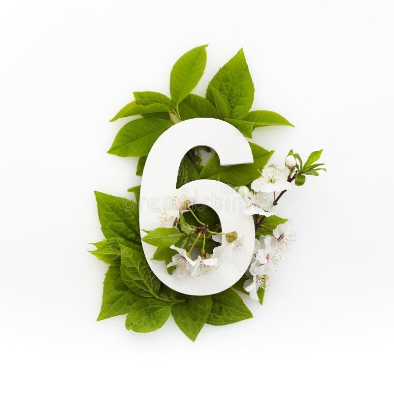 Nummer sex med gröna blad Minimalt sommarkoncept Plattlägg royaltyfri fotografi